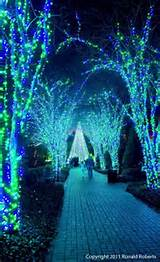 holiday walk atlanta botanical garden