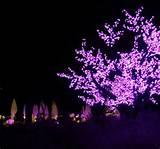 Atlanta Botanical Garden. Garden lights 2012