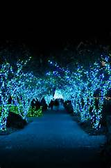 botanical garden garden lights holiday night atlanta ga