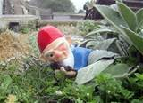 combat garden gnome. defender of vegetables and flowers everywhere.