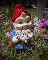 Garden Gnome Photograph - Garden Gnome Fine Art Print