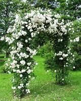 Garden Arch Bagatelle