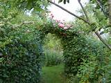 Making a Rose Arch in the garden needn't cost a penny!