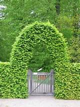 living arch over garden gate