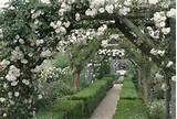 Rose arches in Mottisfont Abbey Garden covered with the white Rose ...