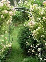 white climbing roses over an arch.