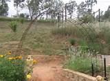 diy garden arch idea 1