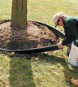 installing ediging between lawn and small flower bed adds curb appeal