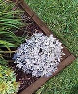 top best new garden edging home depot garden edging ideas