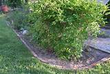 lawn edging ideas cheap ideas for landscaping edging plants