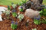 inexpensive landscape edging ideas