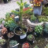 Rainbow Garden Nursery & Tree Farm, Glendora, CA, USA