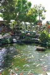 koi pond rainbow garden nursery southern ca