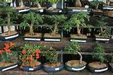 gardens inside the word bonsai classnobr sep bonsai workshops and