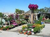 western garden nursery photos