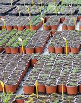garden nursery supplies