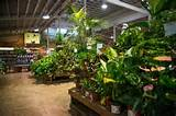 armstrong garden centers houseplant department