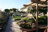 Armstrong Garden Centers, Monrovia