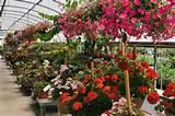 Nursery Hills – An online nursery gardening catalog