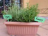 Thyme (RM7.50) and Rosemary (RM7.50)