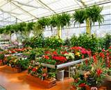 Plant nurseries may unknowingly be selling plants that are not what ...