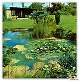 1968 mid century modern old school garden design plants lawns rock