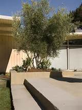 17,046 mid century modern garden Home Design Photos