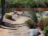 some unique desert landscaping ideas