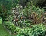 rot-resistant cedar trellis for tomatoes, potager, rustic garden