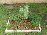 Small Herb Gardens