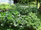 Description Garden plants in summer.JPG