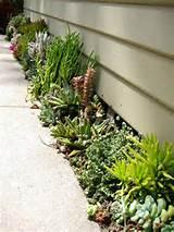Gardens Ideas, Garden Ideas, Succulent Gardens, Plants, Front Yards ...