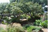 The medicinal herb garden at The Cloisters in New York City.