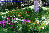 Flower Bed Pictures