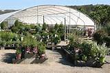 village nurseries expands sunset western garden collection throughout