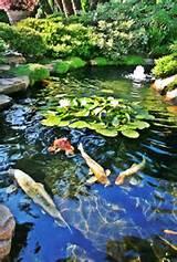 40 Zen Garden Designs