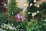 Garden decorations and climbing rose plants for beautiful house ...
