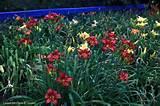 conradartglassgardens blogspot com
