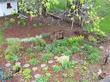 Garden: Shade Garden in April (pics), trim ideas needed., 600x450 in ...