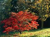 Deciduous Trees and Shrubs Give Bright Fall Color