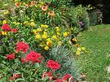 , lilies, dianthus and more in a long, narrow rock wall flower bed ...