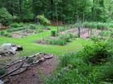 reasons to start a vegetable garden vegetable gardener