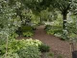 Shade Gardens