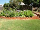 Here is the flower bed in July with sunflowers beginning totower over ...