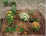 raised garden beds 2218x1764 autumn flower bed wicca online community