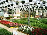 ... Services Garden Tips Saving & Promotions The Garden Center The Nursery