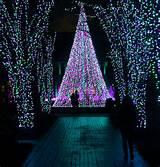 atlanta botanical gardens holiday lights 02