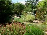 Description Springs Preserve garden plants.jpg