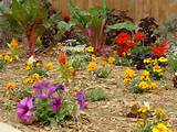 flower bed i did over easter weekend it was a pretty large flower bed