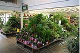 Armstrong Garden Centers, Mission Valley - San Diego